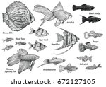 collection of aquarium fish... | Shutterstock .eps vector #672127105