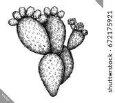 Engrave Isolated Prickly Pear...
