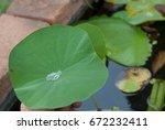 water rolling on lotus leaf | Shutterstock . vector #672232411