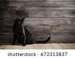 Stock photo black cat on dark wooden background 672313837