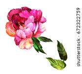 wildflower peony flower in a... | Shutterstock . vector #672322759