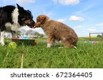 border collie puppy with mum in ... | Shutterstock . vector #672364405