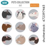 rat breeds icon set flat style... | Shutterstock .eps vector #672397465