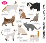 cat breeds icon set flat style... | Shutterstock .eps vector #672397495