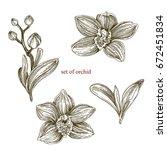 set of orchids. leaves  flowers ...   Shutterstock .eps vector #672451834