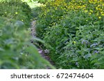 plants and flowers   Shutterstock . vector #672474604