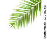 palm leaf  isolated on white... | Shutterstock . vector #672482551