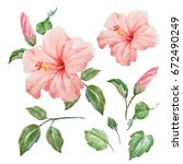 watercolor tropical flower pink ... | Shutterstock . vector #672490249