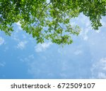 Looking Up Toptrees Blue Sky - Fine Art prints