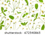 mint with chamomile on white... | Shutterstock . vector #672540865