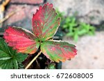 autumn colors  red and green... | Shutterstock . vector #672608005