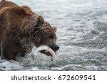 Alaskan brown bear catching and feeding on sockeye salmon in Brooks River in Katmai National Park, Alaska