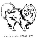 Stock vector decorative portrait of standing in profile dog breed spitz pomeranian vector isolated 672621775
