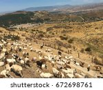 Herd Of Fenced Goats Resting O...