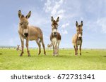 Three Funny And Curious Donkey...