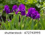 bouquet of flowers irises on... | Shutterstock . vector #672743995