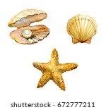 set of sea shells  starfish ... | Shutterstock . vector #672777211