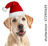 Cute Puppy In Santa Hat On...