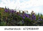 small but beautiful wildflowers ... | Shutterstock . vector #672908449
