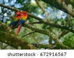 two beautiful parrots on tree... | Shutterstock . vector #672916567