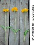 Three Yellow Flowers