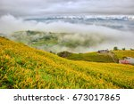 beautiful lily field with...   Shutterstock . vector #673017865
