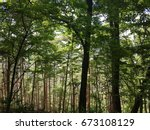 the beautiful shady green forest | Shutterstock . vector #673108129