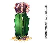 green  purple cactus species... | Shutterstock . vector #673108831