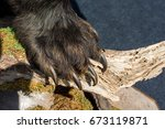 black bear paw with sharp claws ... | Shutterstock . vector #673119871
