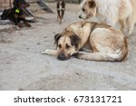 Homeless Dogs. Selective Focus