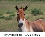 Small photo of Kulan , also known as the Transcaspian wild ass. Wild life animal. Equus hemionus kulan.