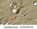 Brocken Seashells On Wet Sand...