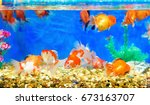 gold fish. | Shutterstock . vector #673163707