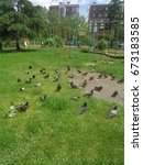 Pigeons among green grass on playground, residential buildings behind - stock photo