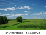 Cornfields in July: Cornstalks have grown almost to their full height by the end of July in southern Wisconsin.