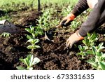 man wearing gardening gloves... | Shutterstock . vector #673331635