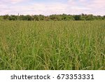 weed infestation in agriculture ... | Shutterstock . vector #673353331