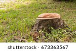 Stump On Green Grass In The...