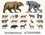 gorilla  moose or eurasian elk  ... | Shutterstock .eps vector #673445989