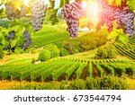red grapes hanging in vineyard. ... | Shutterstock . vector #673544794