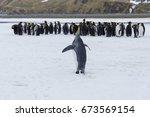 king penguins on south georgia... | Shutterstock . vector #673569154
