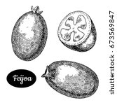 fresh feijoa. hand drawn sketch ...   Shutterstock .eps vector #673569847