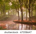 Forest In Autumn With Pond And...