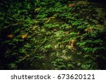 Small photo of Vines sway along the rock.