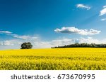 Yellow Rapeseed Field And Blue...