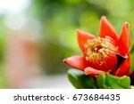 Pomegranate Tree Flowers