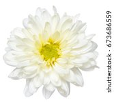 top view of white chrysanthemum ... | Shutterstock . vector #673686559