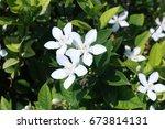 flower | Shutterstock . vector #673814131