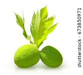 fresh green breadfruit isolated ... | Shutterstock . vector #673850971