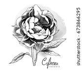 black and white peony flower...   Shutterstock .eps vector #673866295